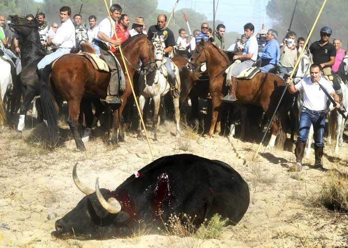 Platform Torture is Not Culture takes legal action against Board of Toro de la Vega