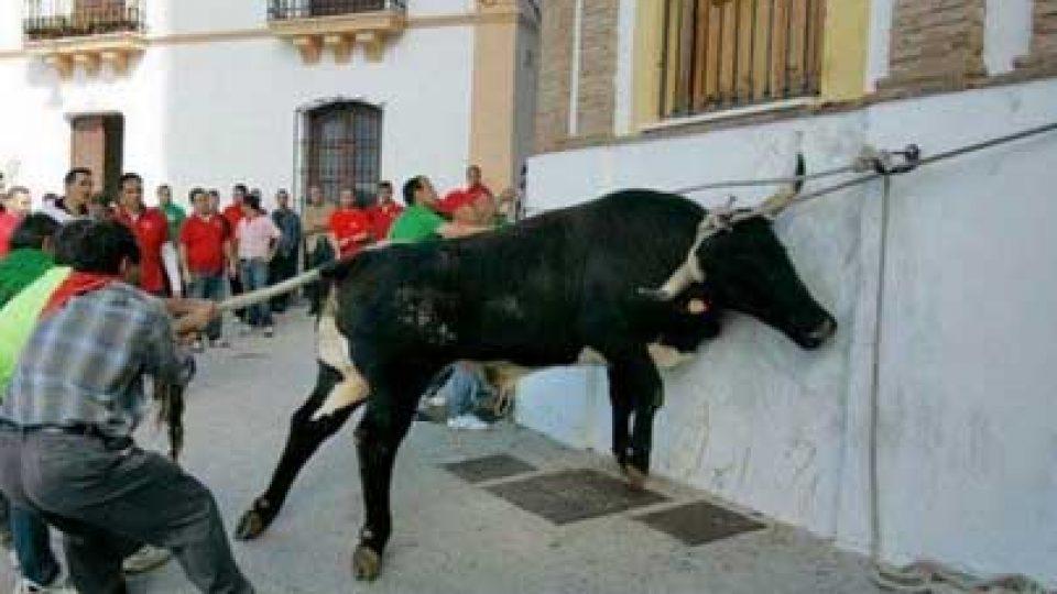 End Bullfights