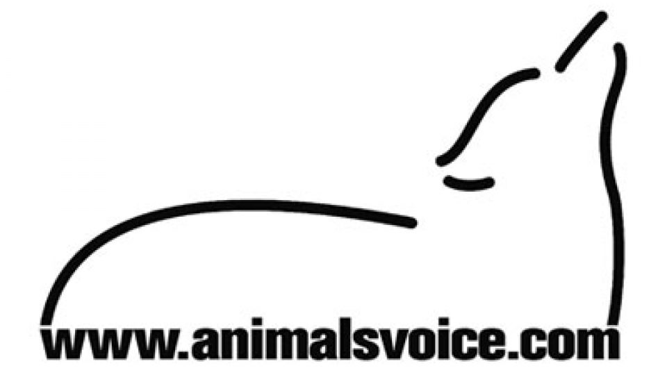 The Animals Voice