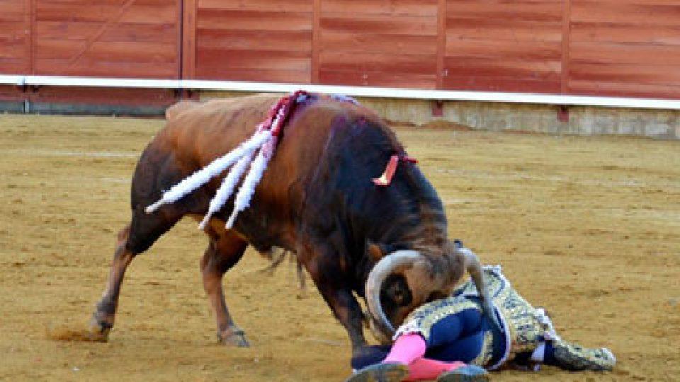 bull-goring