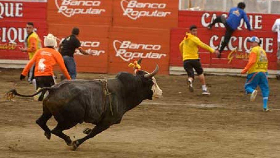 Costa Rica Bullfighting