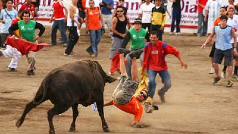 Costa Rica Bullfight